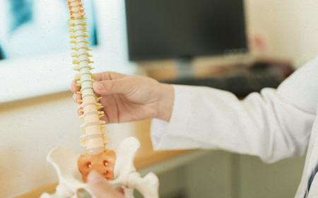 背骨の模型
